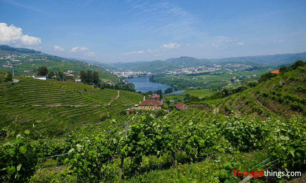 Best trails in the Douro rigion