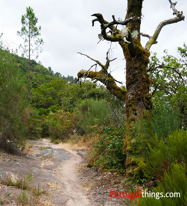Preguiça trail