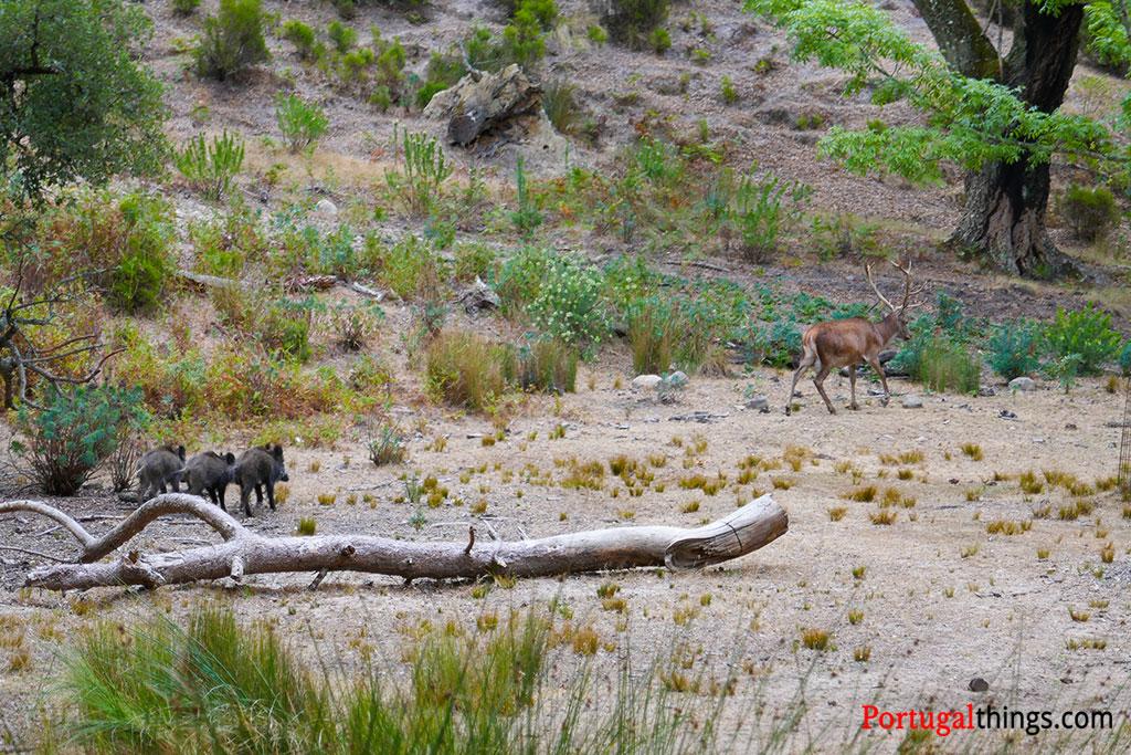 Os animais da tapada de Mafra são uma das principais atracções deste belo parque