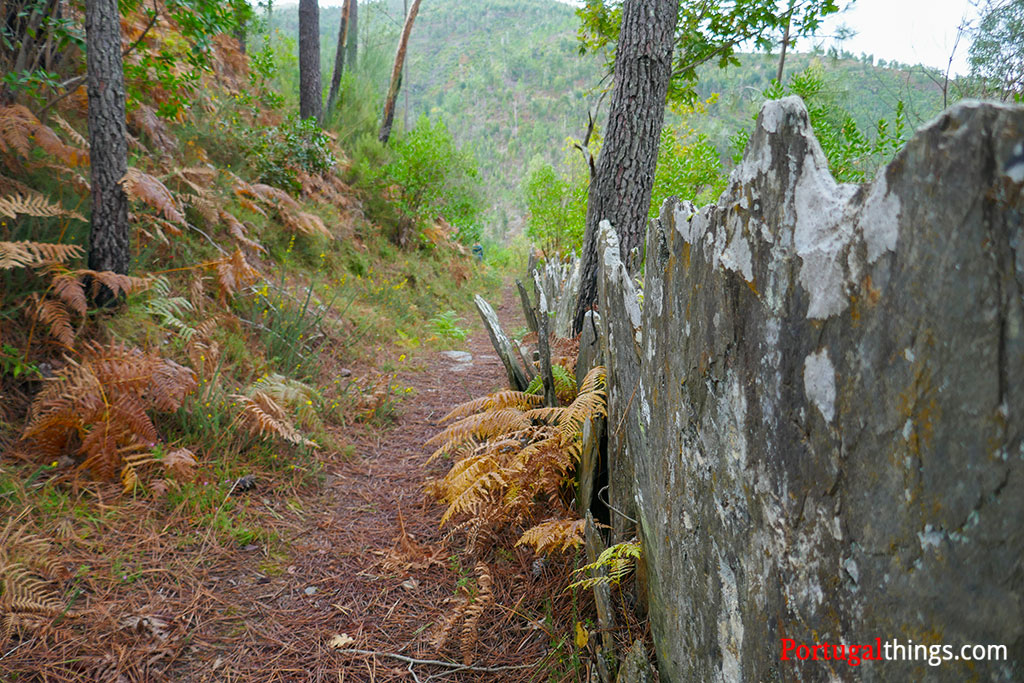 Is the trail PR5 of Livraria do Paiva family-friendly?