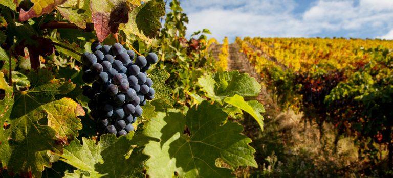 As Regiões vinícolas de Portugal cover
