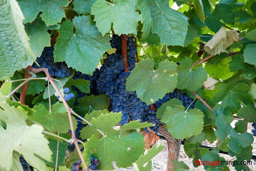 As Regiões vinícolas de Portugal
