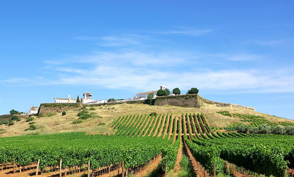tudo sobre as Regiões vinícolas de Portugal