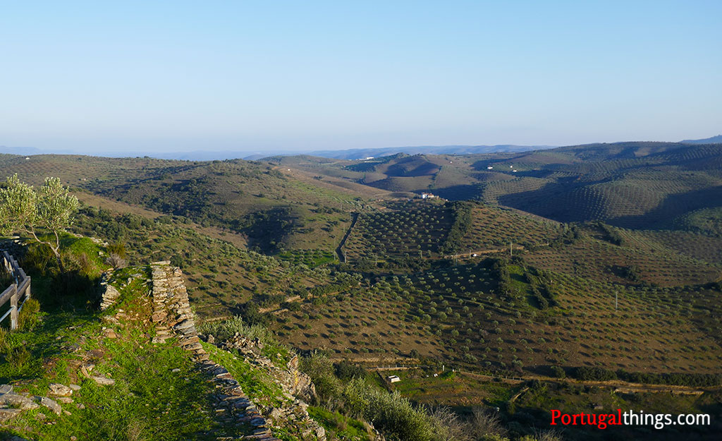 The Protected Designation of Origin olive oils in Portugal
