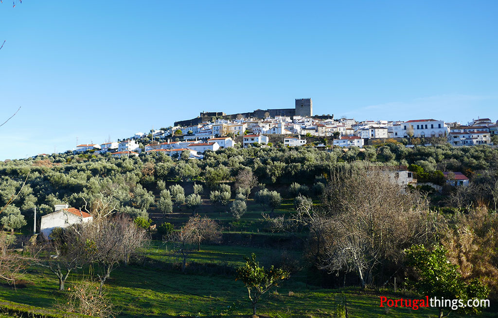 Curiosities about Portuguese olive oil