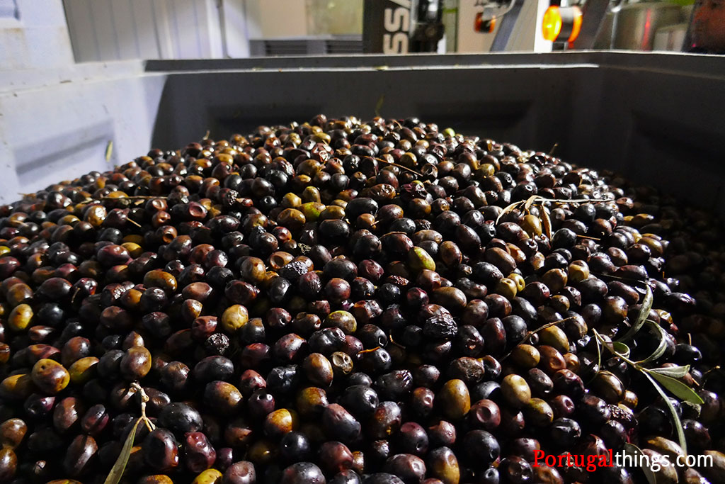 Information about Portuguese olive oil