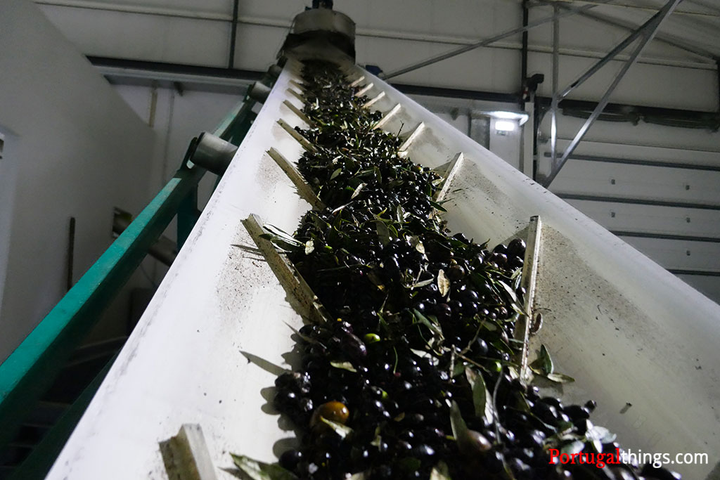 Informations about Portuguese olive oil