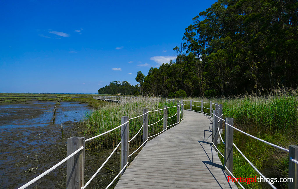 Aveiro walkways - what to expect and how to go?