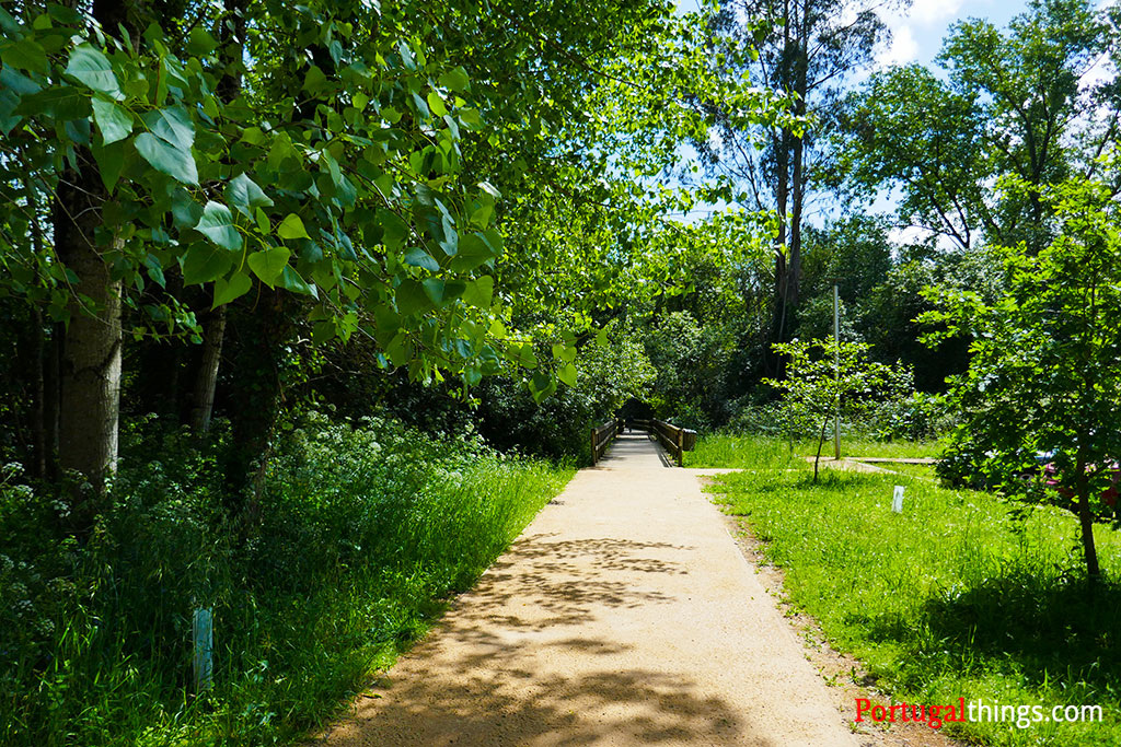 How to go to the trail Fiães Walkways